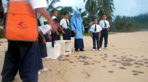 Before school Hatchling release