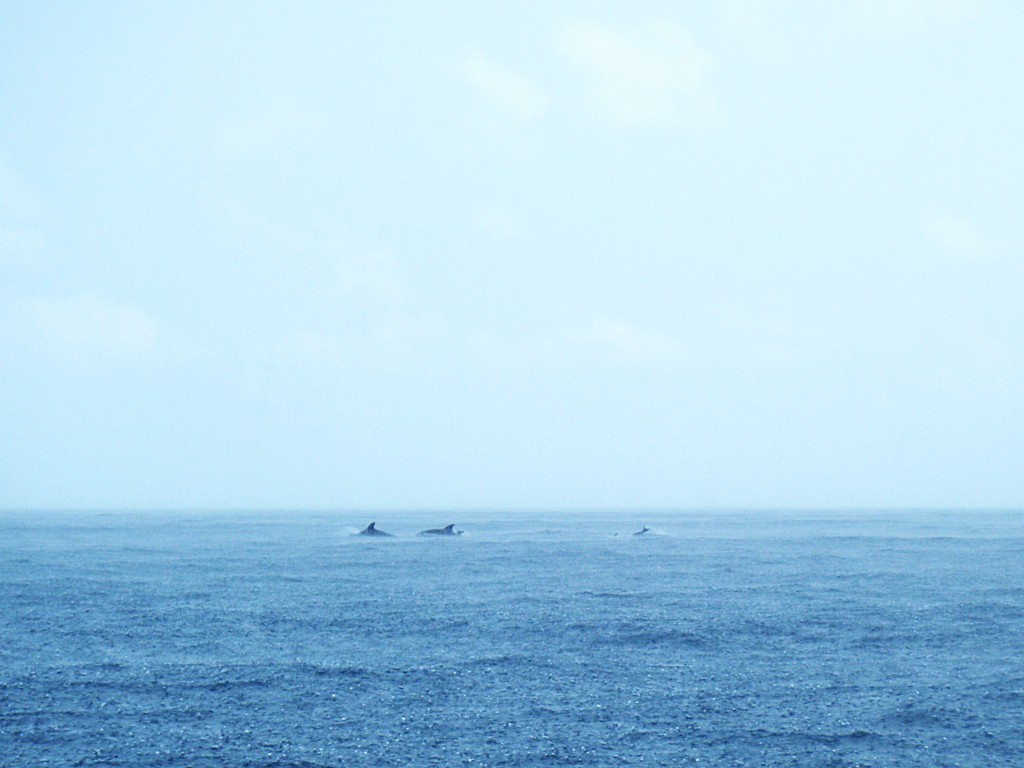 dolphin sighting off the NE coast of Tioman