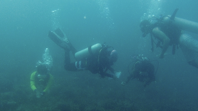 Working with Reef Check Malaysia's Tioman team for a 3 in 1 day survey session of Tioman's East coast
