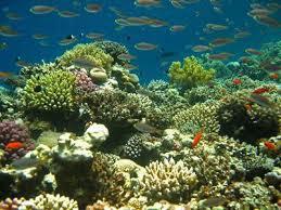 Kg Juara Coral
